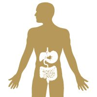 The intestines, stomach, and abdomen of the human body.