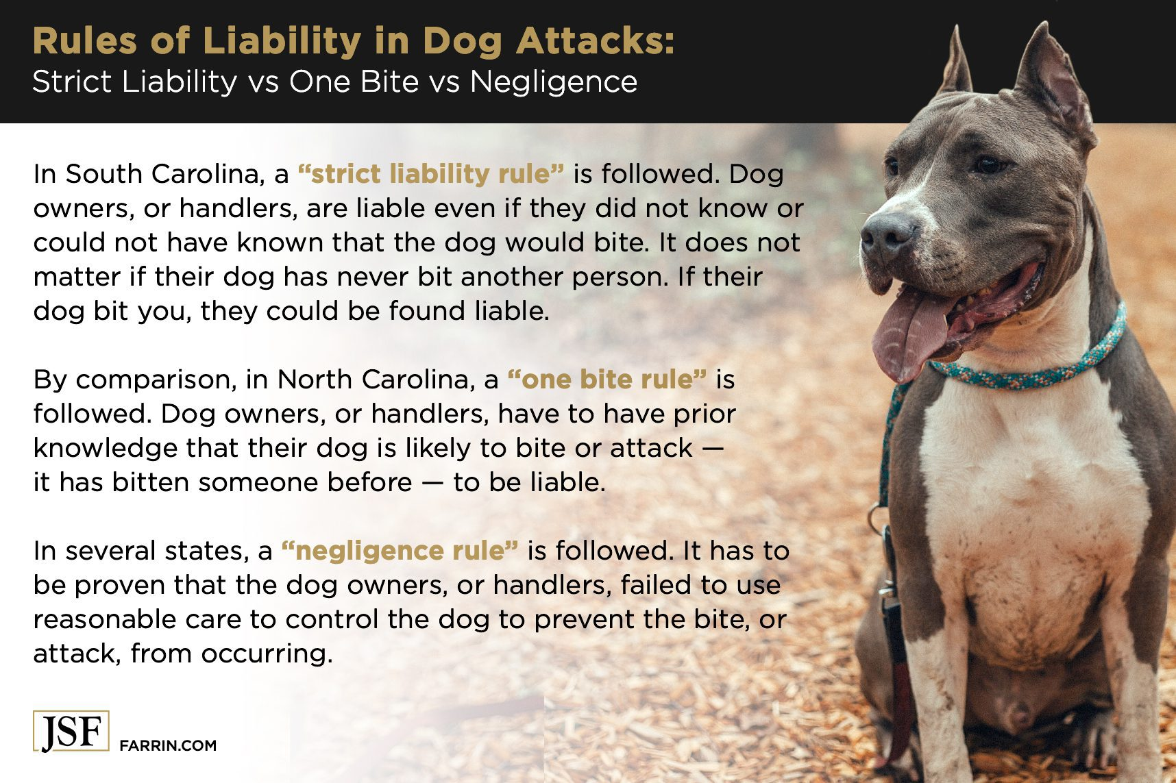 Differences in liability regarding dog attacks in NC and SC, with a gray and white Staffordshire terrier.